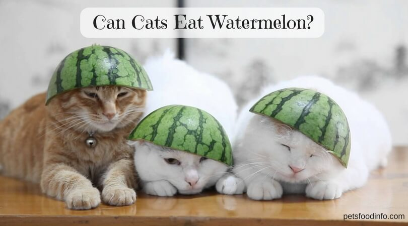 Can my cats eat watermelon