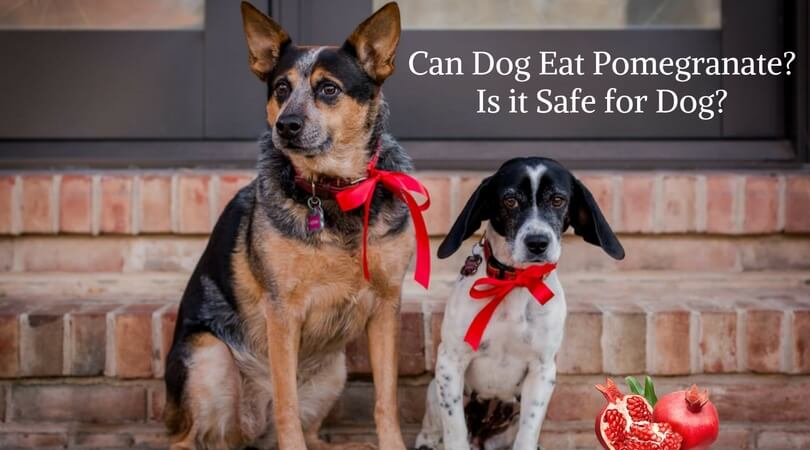 Can Dog Eat Pomegranate- Is it Safe for Dog- (1)