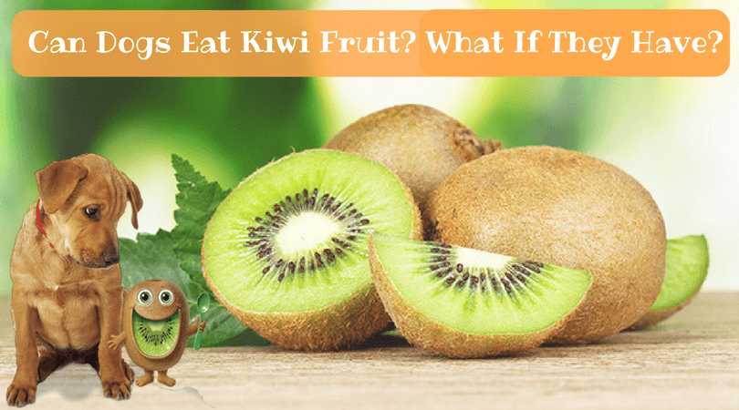 Can Dogs Eat Kiwi Fruit- What If They Have-