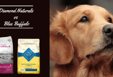 Photo of Is Diamond Dog Food Better than Blue Buffalo?- Know Brands Difference