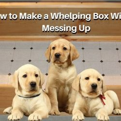 How to Make a Whelping Box Without Messing Up