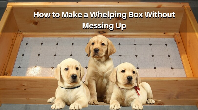 Photo of How to Make a Whelping Box Without Messing Up? – Know All Reasons