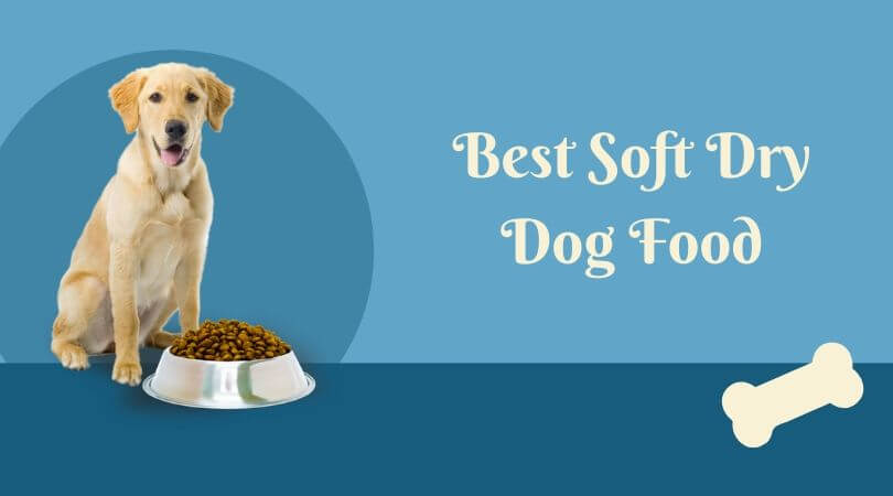 Photo of Best Soft Dry Dog Food: Top Rated Products for Your Lovable Pet