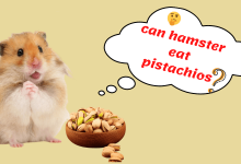 Photo of Can Hamsters Eat Pistachios?- Add This Nutrition in your Pet Diet