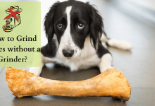 Photo of How to Grind Bones without a Grinder?– Make Pet Meals Easily