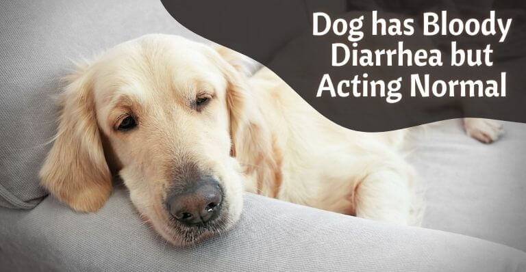 Dog has bloody diarrhea but acting normal