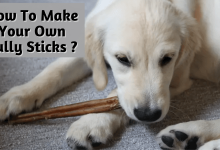 Photo of How to Make Your Own Bully Sticks? – Give your Pet Chew Treats