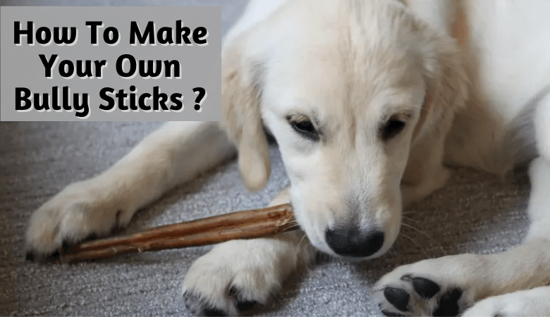 How To Make Your Own Bully Sticks?